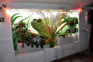 mural-de-terrario-en-el-lizard