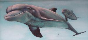 Mural-delfin